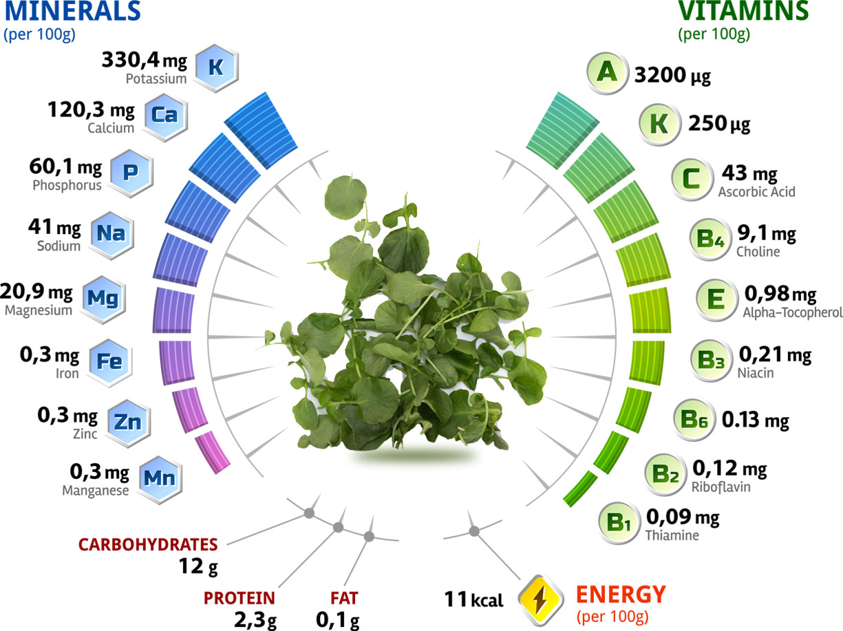 Watercress - Minerals and Vitamins